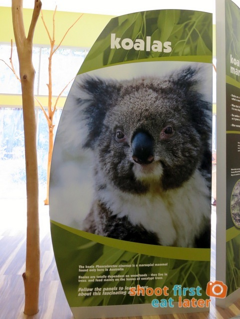 the Koala Conservation -003