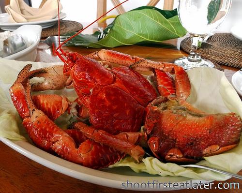 Fundacion Pacita, Batanes- coconut crab