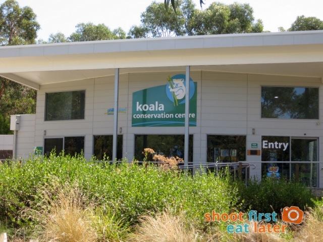 the Koala Conservation