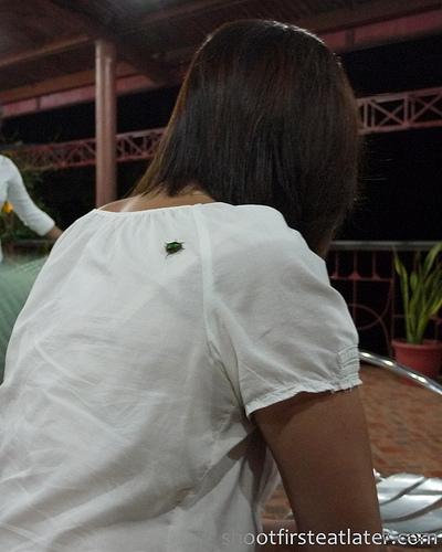 salagubang or June beetle