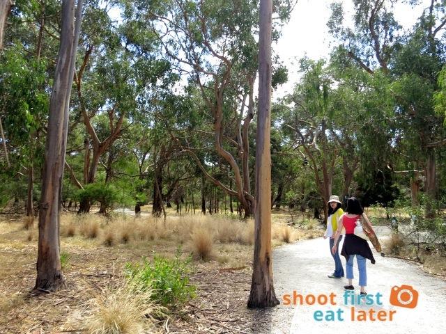 the Koala Conservation -007