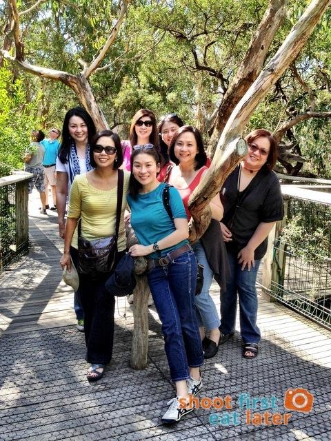 the Koala Conservation -018