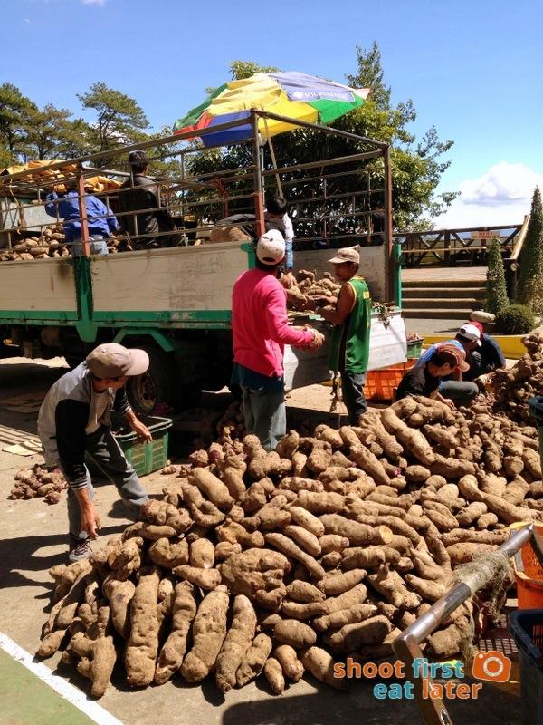 Ube (Purple Yam) delivery at Good Shepherd