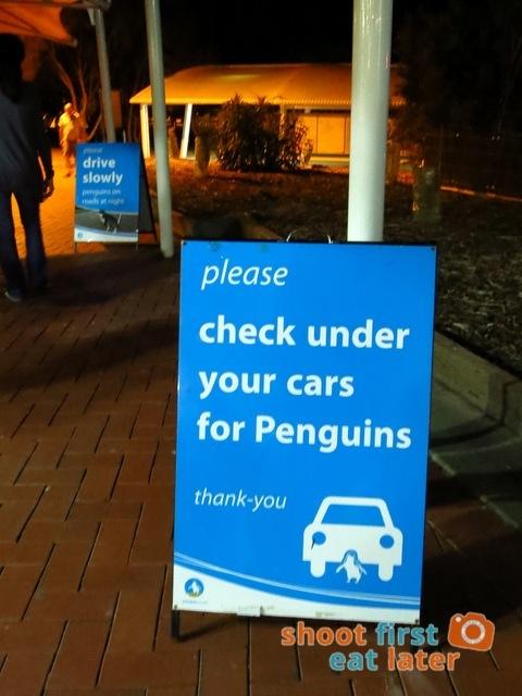 Phillip Island Penguin Parade-006