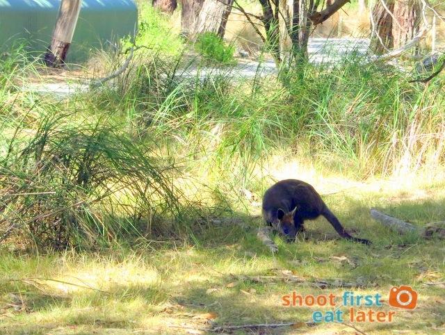 the Koala Conservation -017