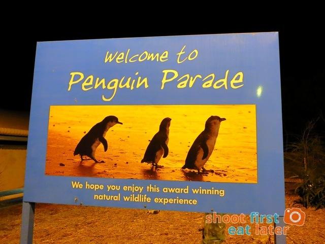 Phillip Island Penguin Parade1