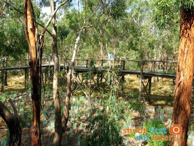 the Koala Conservation -012