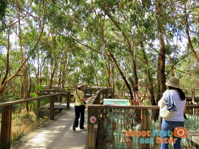 the Koala Conservation -011